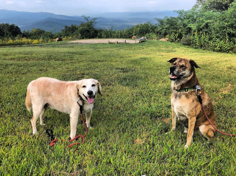 Shenandoah-National Park with Dogs