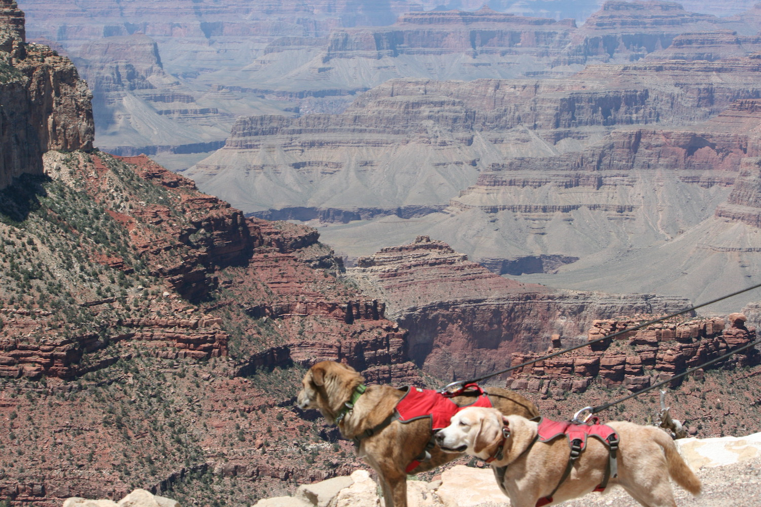 Grand-Canyon-National Park with dogs