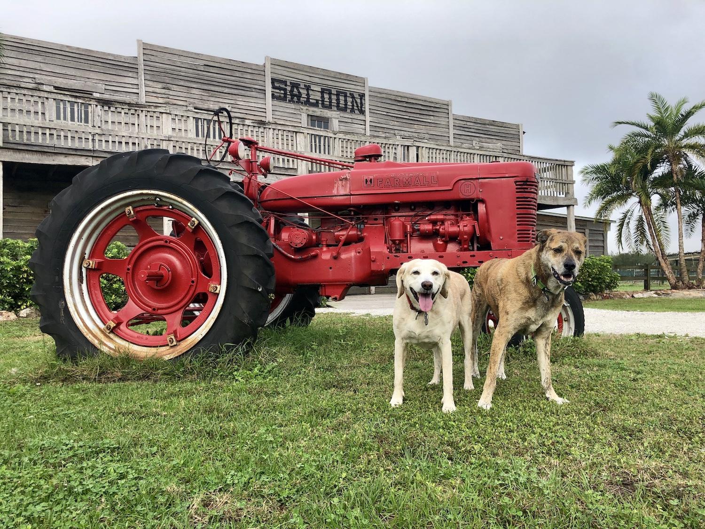 Brickle and Digby at Hunsader Farms in Bradenton, Florida.