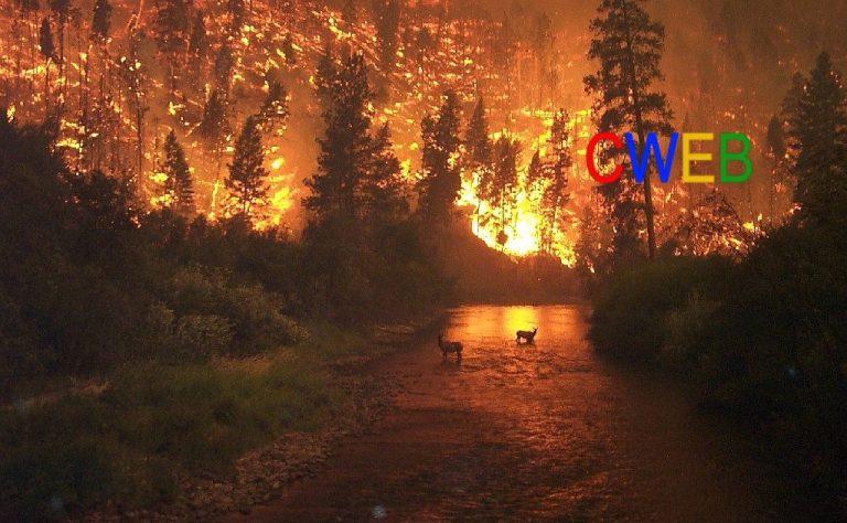 Deerfire.jpg