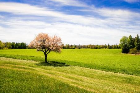 farm_field_1 copy