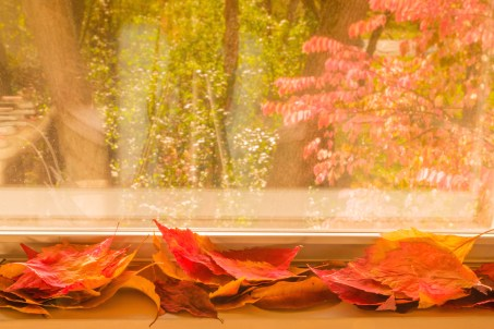 leafs_on_window