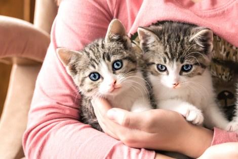 kittens_4 copy