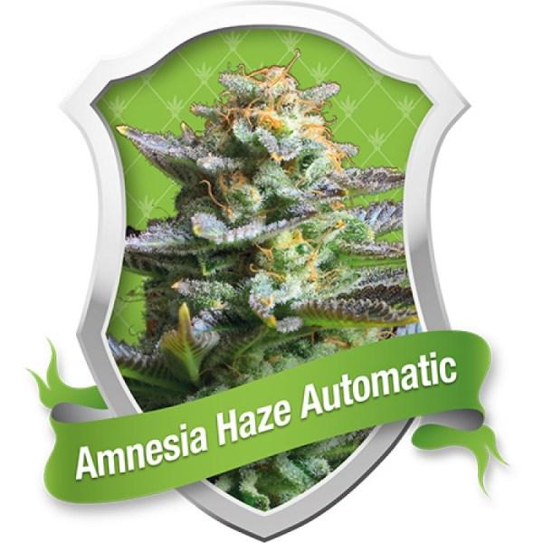 Amnesia Haze Automatic Feminized Seeds (Royal Queen Seeds)