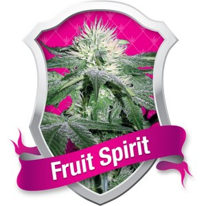 Fruit Spirit Feminized Seeds (Royal Queen Seeds)