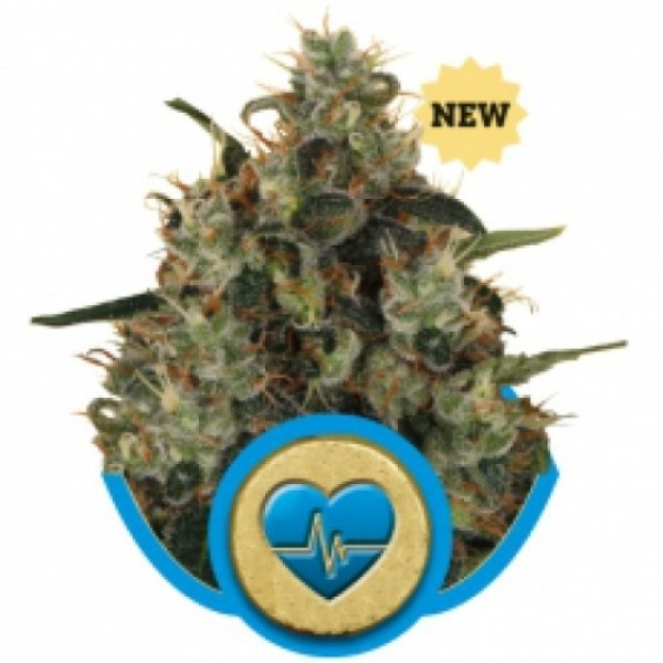 Medical Mass Feminized Seeds (Royal Queen Seeds)