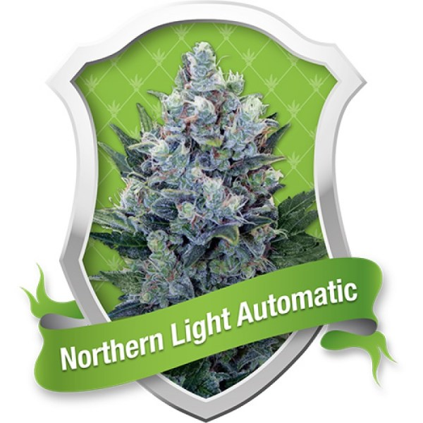 Northern Light Automatic Feminized Seeds (Royal Queen Seeds)