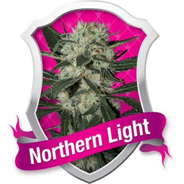 Northern Lights Feminized Seeds Best 1 (Royal Queen Seeds)