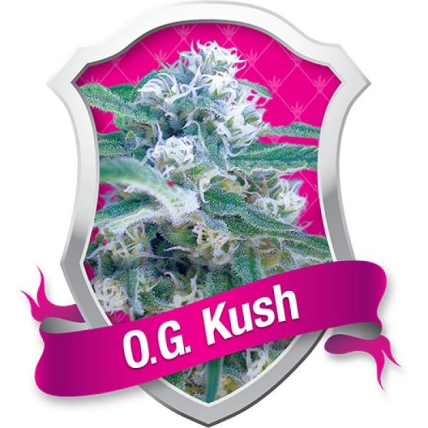 O.G. Kush Feminized Seeds (Royal Queen Seeds)