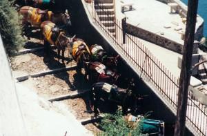 Des mulets permettent d'éviter la descente à pied des 300 marches qui mènent au vieux port...