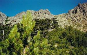 Les sommets autour entre Asco et le col de Verghio