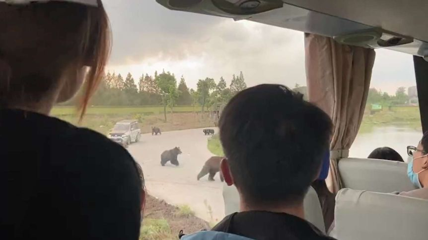 Tourists Watch Bear Maul Worker To Death In Shanghai Zoo