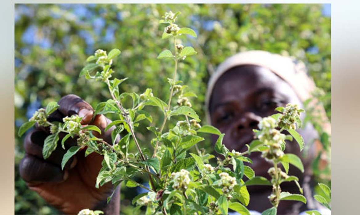 Health Benefits, All You Need To Know About Zumbani