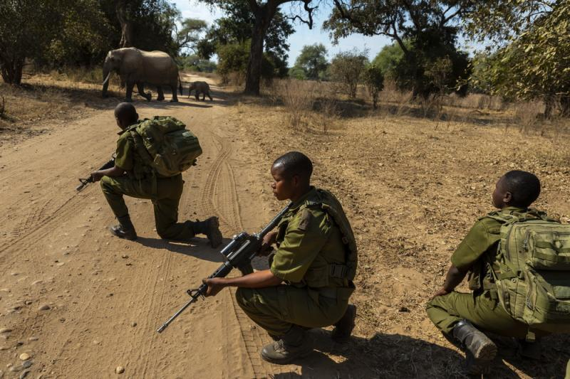 Vicious Gang Of Poachers Burns Investigator In His Vehicle