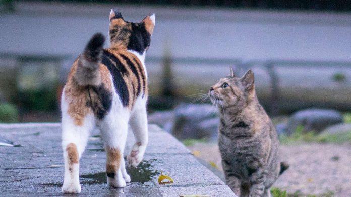 SA Satanic Church Offers R10 000 Reward To Find Serial Cat Killer