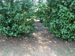 A Way through a hedge