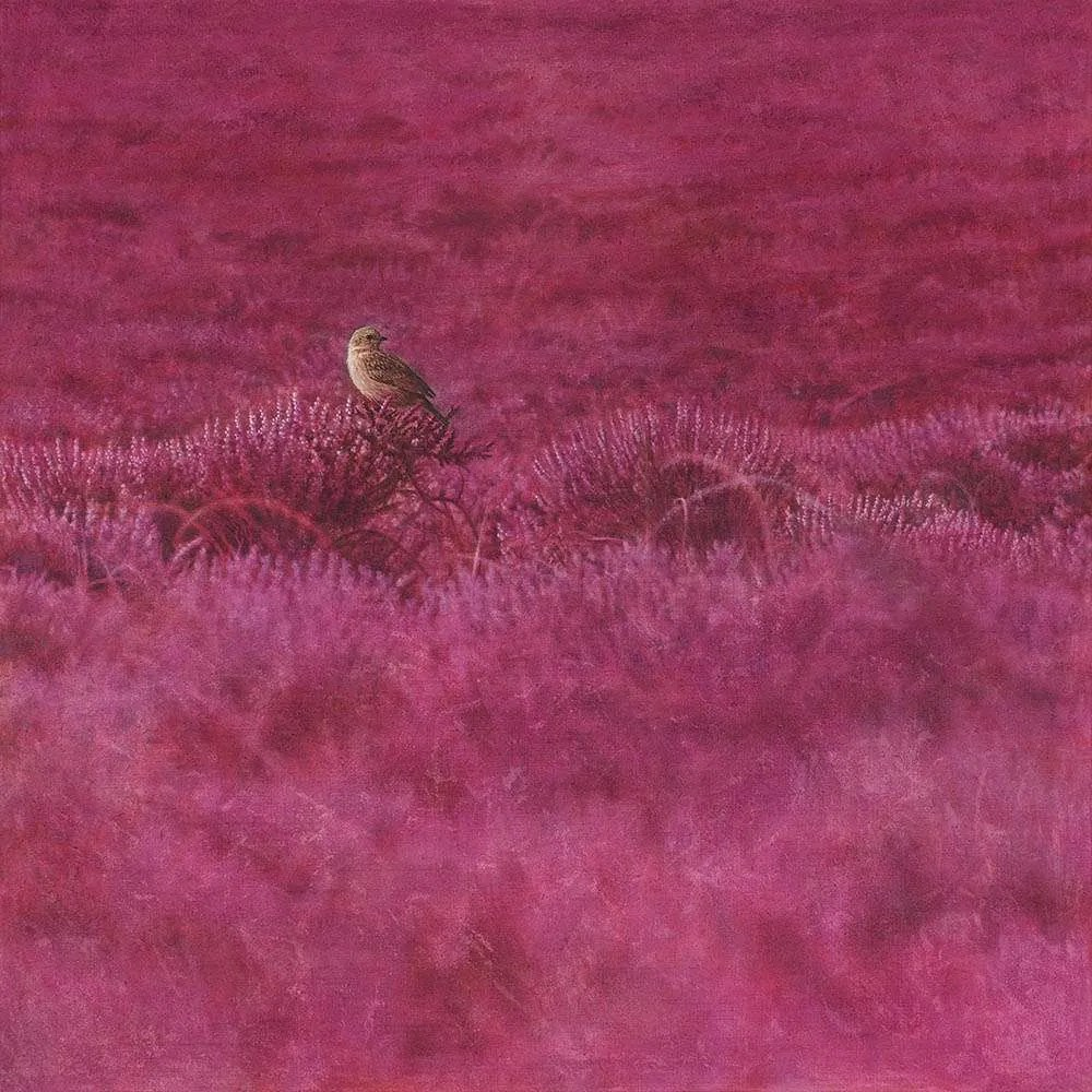 Pipit in heather artwork