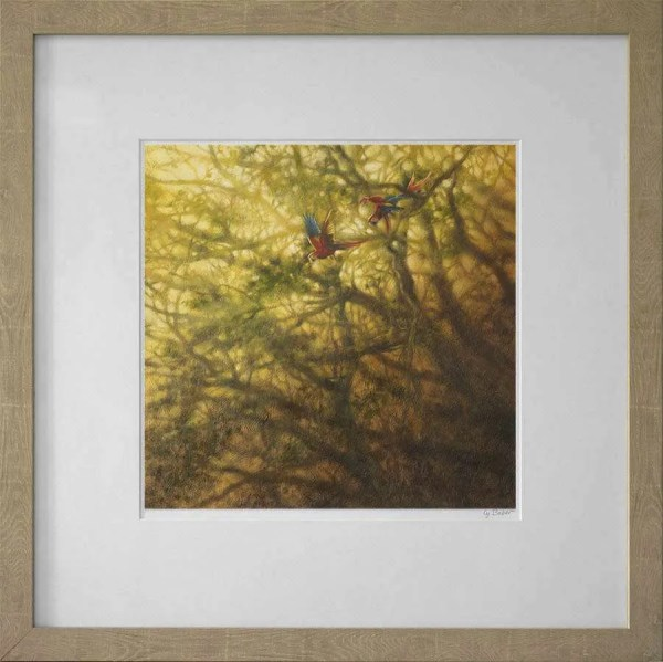 macaws light framed fine art print