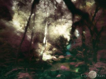 Niamh's forest (IR)