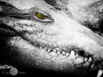 dinosaur in the lagoon