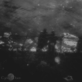 we shadows ( reflecting on the breakwater)