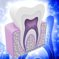 Enamel is the hardest substance in the body