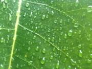 Vista cercana de una hoja mojada por la lluvia.