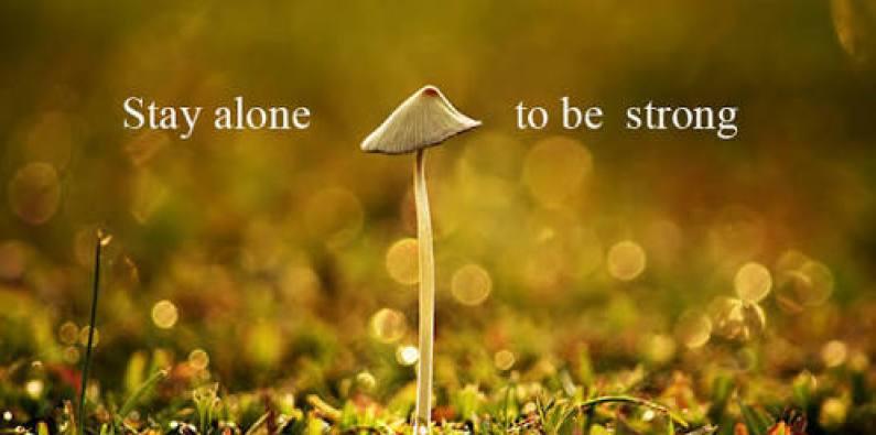a mushroom