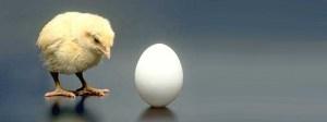 Diabetes_chicken_HRT_egg