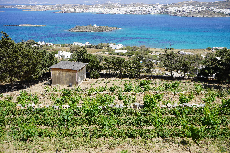 Petra Farm | Paros Island