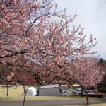 2019年3月のマイナー錬「赤城千本桜錬」その1