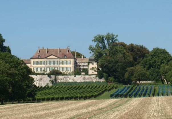 A chateau plus vineyards.