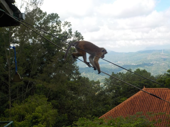 a monkey trying to escape, nice try it crossed all our minds. stop tempting us