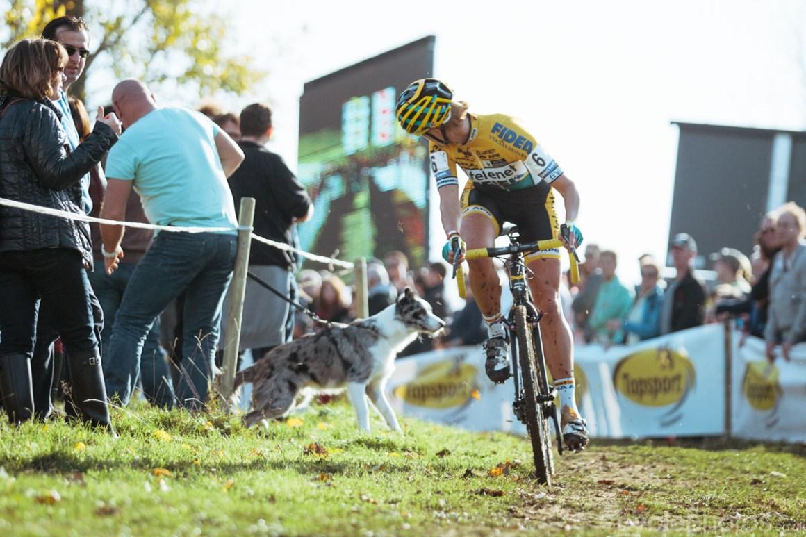 2014-cyclocross-bpost-bank-trofee-koppenbergcross-ellen-van-loy-dog-145008