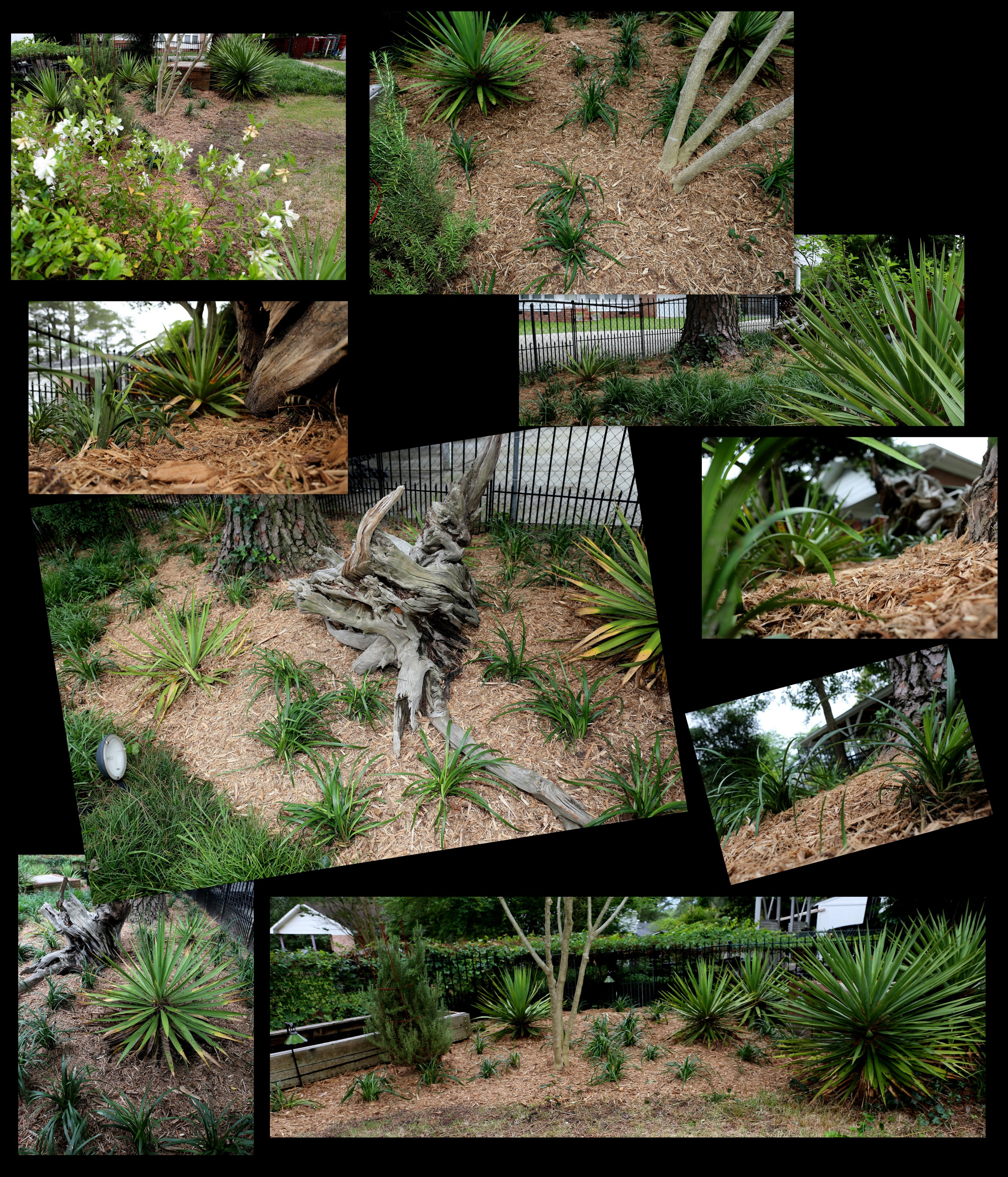 Photography ~ Backyard Landscaping–Added Fertilizer & Mulch around the Liriope [Monkey Grass] Collage & Slideshow, 05/24