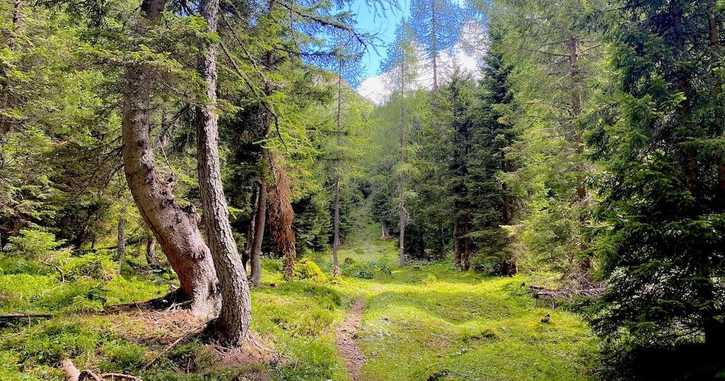 Bosco della Val Cimoliana