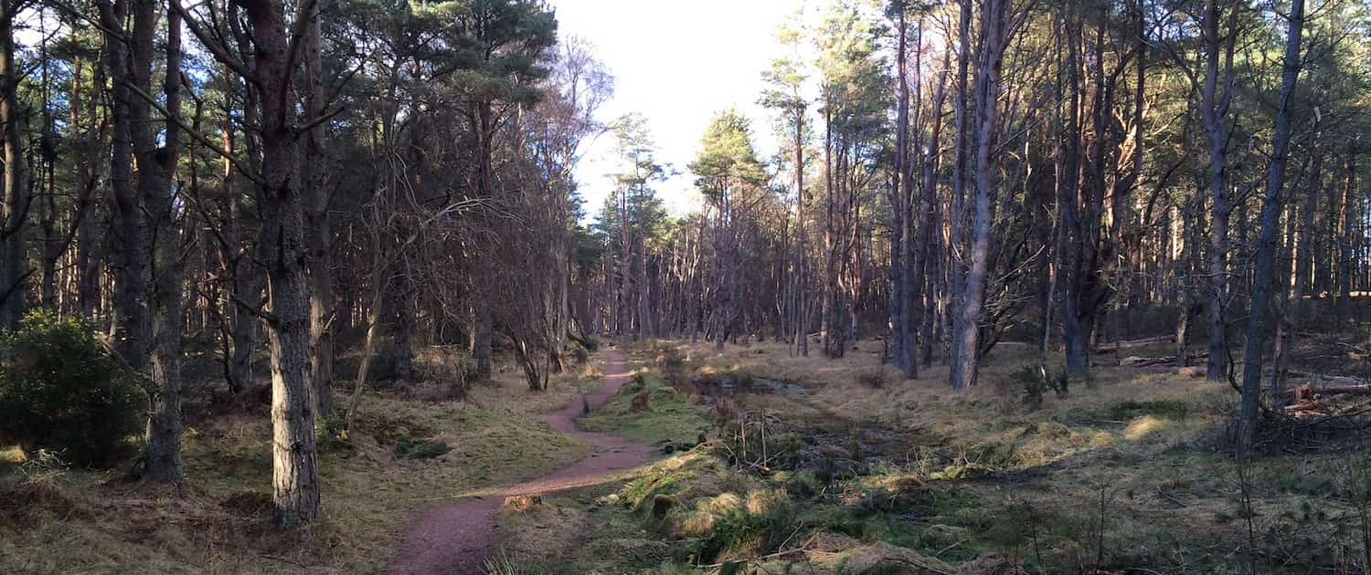 Fife Forests
