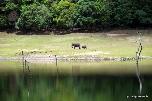 maman éléphant et son bébé près du lac