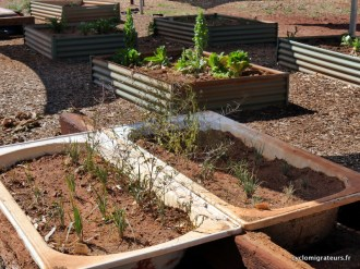 Le jardin communautaire