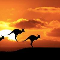 Un an en Australie, c'était comment ?