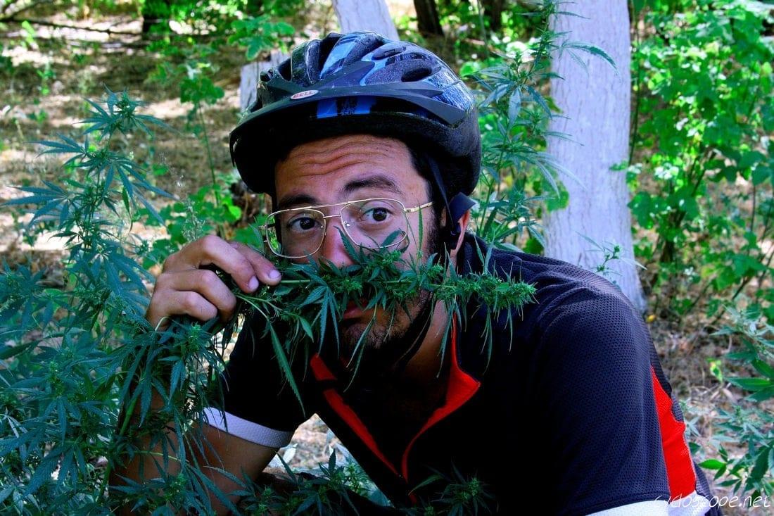 wild Marijuana Kazakhstan