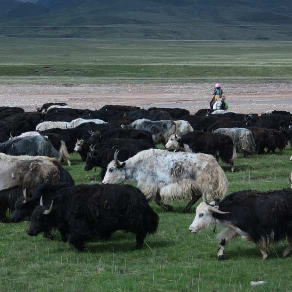 Qinghai, a Pass a Day Keeps the Doctor Away (Chinese Proverb) 9