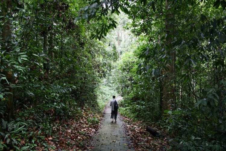 passeggiando nella giungla di Niah Borneo