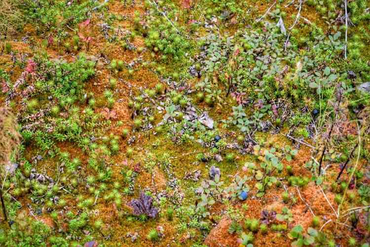 moss in finland