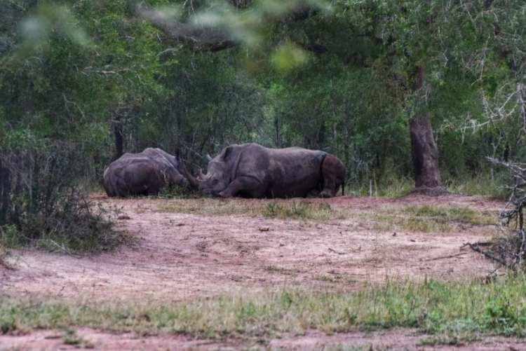 Hluhluwe Imfolozi game reserve KZN