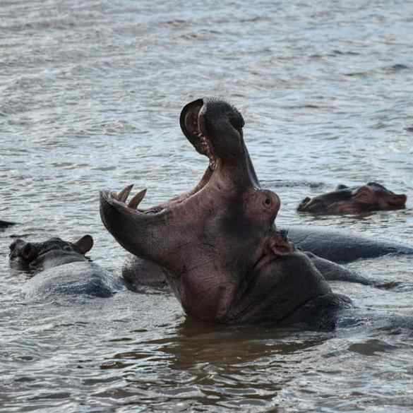 Meeting the Hippos in St Lucia: a Boat Tour in the iSimangaliso Wetland Park 10