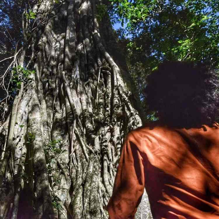 Chirinda Botanical Forest Reserve
