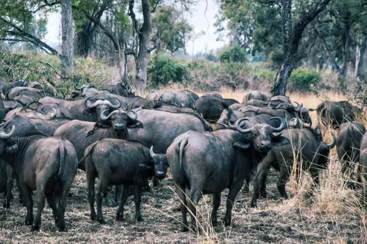 fauna of south luangwa zambia