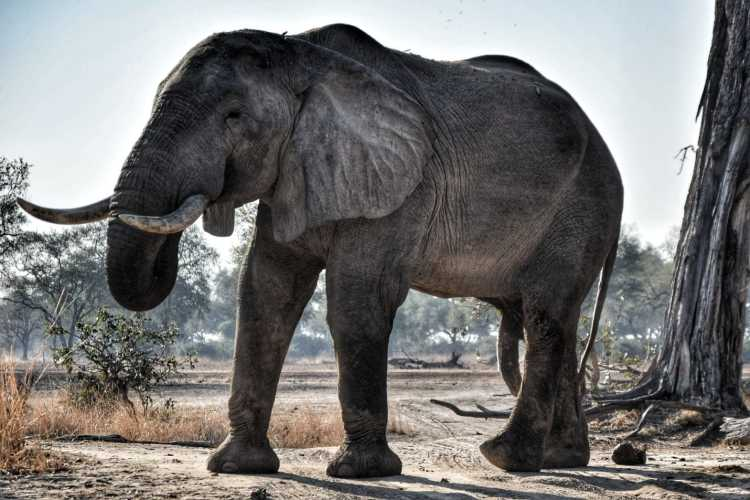 best time safari zambia