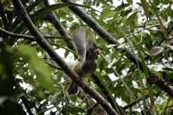 uccelli seychelles